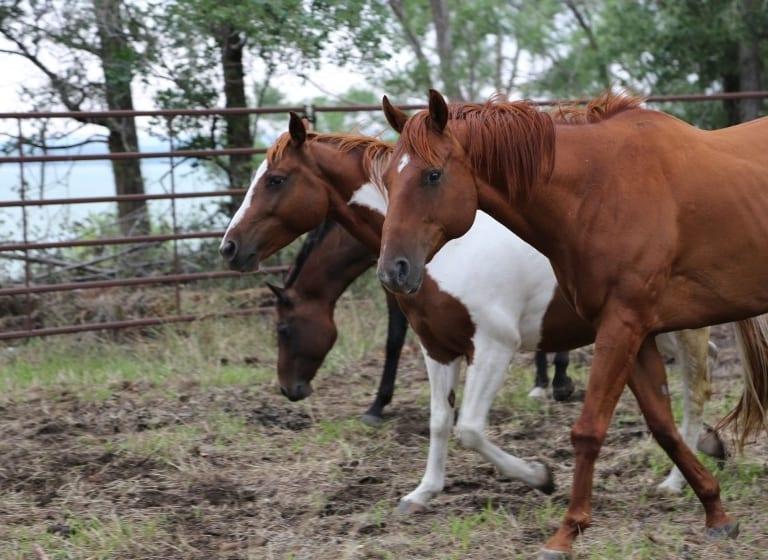 Le pouvoir des chevaux : les élèves participent à des séances d'équithérapie