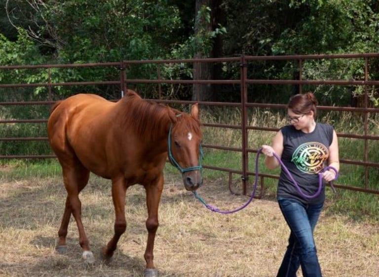 La thérapie par le cheval aide les élèves de St Joseph à surmonter les épreuves